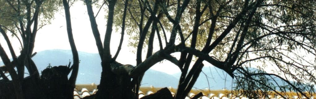 View from Joanna Watters Greek island Summer School
